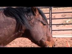 The EAGALA Model in practice - what equine therapy looks like.