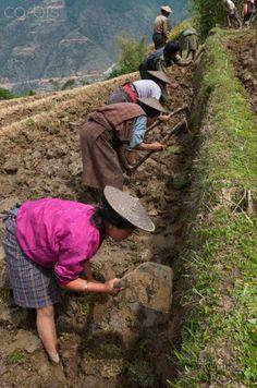 Rice Terraces in Bhutan
