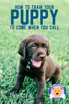Dog Obedience Training Does your new puppy listen to you? How to train your puppy to come when called. Training a new puppy to come when called is important first step. Check out these puppy training tips to help get your started. Pets, Pet Dogs, Dogs And Puppies, Puppies Tips, Baby Dogs, Baby Puppies, Puppy Training Tips, Training Your Dog, Potty Training