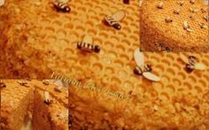 Медовик торт: оригинальное украшение- соты и пчелки, а также рецепт.