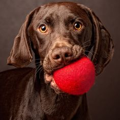Want to play? Such intensity. Dogs take play & balls quite seriously. What  I'm saying is, you'd best tell him yes.