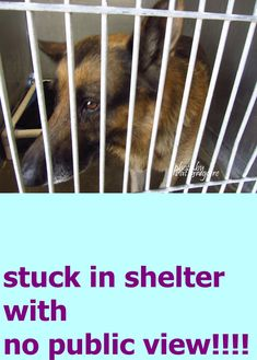7/23 STILL THERE!!!!A4843046 I am a friendly male brown/black German Shepherd. I came to the shelter as a stray on June 13. available 6/17/15. located in bldg 4 - no public view Baldwin Park shelter Open for Adoptions 7 days a Week 4275 Elton Street, Baldwin Park, California 91706 Phone 626 430 2378 https://www.facebook.com/photo.php?fbid=986286641383173&set=a.705235432821630&type=3&theater