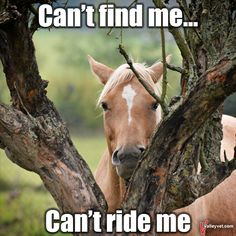 -I hate when they run from you and want to play when you just want to ride. I hate when they run from you and want to play when you just want to ride. Funny Horse Memes, Funny Horse Pictures, Funny Animal Jokes, Funny Horses, Cute Horses, Pretty Horses, Horse Love, Cute Funny Animals, Animal Memes