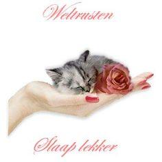 Welterusten plaatjes, animatieplaatjes, bewegende plaatjesen animaties van Animatieplaatjes.nl 2 Good Night Sweet Dreams, Good Night Quotes, Animals And Pets, Cats, Slaap Lekker, Fun, Eventing Quotes, Sleep Well, Netherlands