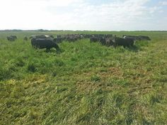 Target sustainable grazing    Cover crops and holistic management practices on the Richards' farm in Saskatchewan