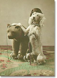Poodle and bear. Great photo!