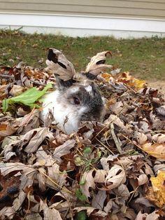 16 lapins pour affronter la semaine tranquillement