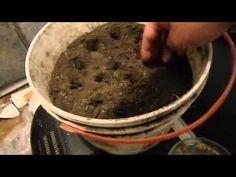 Como germinar semillas de rosas