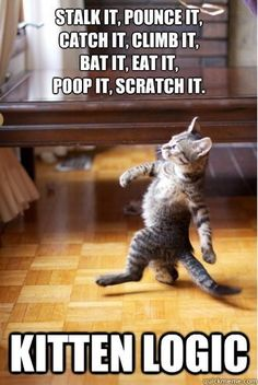 Enjoy funny animal memes that include cat memes, your favorite dog memes, funny squirrel memes, cute bear memes and a lot more that will make you laugh! Funny Animal Memes, Funny Animal Pictures, Funny Cute, Funny Animals, Cute Animals, Funny Memes, Logic Memes, Tgif Funny, Animal Jokes