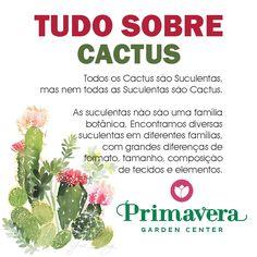 Confira a galeria de informações e curiosidades que o Primavera Garden selecionou para você sobre os Cactus, as plantas que estão em alta na decoração de jardins e interiores. #cactus #suculentas #decoracao #jardim #jardinagem #paisagismo