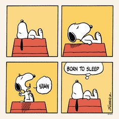 Born to sleep.
