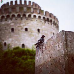 Λευκός Πύργος Θεσσαλονίκη Thessaloniki, Bird Feeders, Greece, Places, Outdoor Decor, Photos, Animals, Greece Country, Pictures