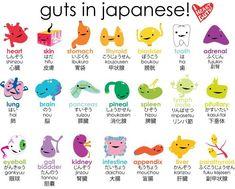 - Korean, Japanese, English I wonder why the romaji for skin is hifu not hada like the hiragana Hiragana, Japanese Symbol, Japanese Kanji, Japanese Memes, Japanese Math, Japanese Grammar, Japanese Phrases, Japanese Words, Cute Japanese Stuff