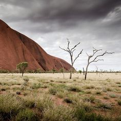 THE TREE by Christian Seidenberg #Photocircle #fineart #travelphotography…