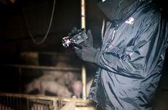 """Nasce """"Free John Doe"""", la nuova unità investigativa in difesa degli animali"""