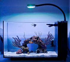 The Ultimate Lighting Customization for Coral Growth that you didn't know about. Coral Reef Aquarium, Saltwater Aquarium Fish, Tropical Aquarium, Saltwater Tank, Marine Aquarium, Fish Aquariums, Nano Aquarium, Tanked Aquariums, Reef Aquascaping