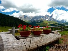 Una facile e panoramica escursione a Malga Bocche, nel Parco Paneveggio, con splendida vista sul Gruppo Delle Pale, nelle Dolomiti del Trentino