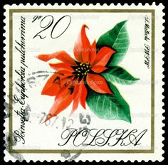 Vintage postage stamp. Flower Poinsetia. — Stock Image © Sergey ...   depositphotos.com - 1024 × 1009 - Search by image Vintage postage stamp. Flower Poinsetia. - Stock Image. Shopping Cart (0)