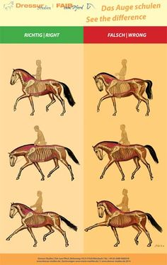 Correct and incorrect postures while riding