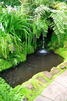 Newest Photographs Tropical Garden water feature Thoughts It's no wonder the r. - Newest Photographs Tropical Garden water feature Thoughts It's no wonder the reasons people want - Small Tropical Gardens, Small Water Gardens, Fish Pond Gardens, Small Garden Fish Ponds, Small Garden Waterfalls, Outdoor Fish Ponds, Garden Pond Design, Tropical Garden Design, Landscape Design