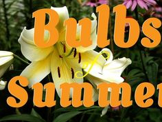Summer-Blooming Bulbs You Should Plant in Your Garden