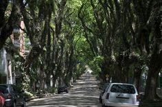 Porto Alegre, Brasil. La Rua más arbolada del mundo.