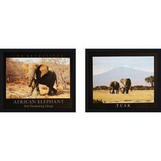 Bloomsbury Market 'Tusk and African Elephant' 2 Piece Framed Photographic Print Set