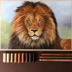 lion лев пастель картина пастелью Rembrandt Koh-i-noor Faber-Castell pastel painting drawing