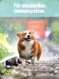 Dein Liebling ist oft krank? Oder du möchtest ihm etwas gutes tun? Dann ist dieses Öl genau passend – es stärkt das Immunsystem deines Hundes. Alle Informationen zu Inhaltsstoffen und Anwendung findest du auf unserer Webseite. #hunde #hundeliebe #hundepflege #naturpur #chemiefrei #kraftdernatur #bioqualität #dogs #petcare #ohnekonservierungsstoffe #handmadewithlove #steiermark #besterfreunddesmenschen #immunsystem Calm Dog Breeds, Best Dog Breeds, Cute Dogs And Puppies, Baby Dogs, Dog Care Center, Most Cutest Dog, Guide Dog, Dog Daycare, Cat Lovers