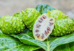 5 Morinda Citrifolia Seeds | Noni - Indian Mulbery Fruit Tree Plant Heirloom Organic Penerials Home Garden Plant Decor Yard DIY Exotic Rare