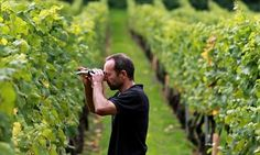 With the help of vineyard management software, you can control the entire viticulture lifecycle. To know more, visit our website. Farming Technology, Renaissance Men, Work Activities, Tracking System, The Real World, Virtual World, Great Britain, Case Study, Countryside