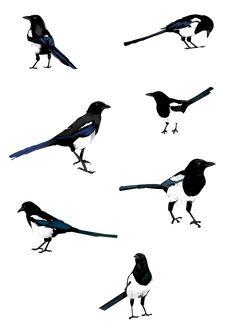 Magpies Art Print by Katherine Blower Illustrator Designer - X-Small Magpie Tattoo, Airplane Tattoos, Bird Illustration, Sea Birds, Ink Art, Beautiful Birds, Art Tutorials, Body Art Tattoos, Inktober