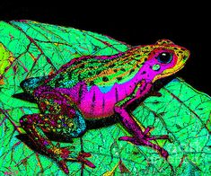 A rainbow colored frog on a leaf ... and judging by the color of the leaf, perhaps this photo has been a tad enhanced???