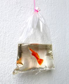 New Realistic Paintings by Keng Lye Painted With Acrylics In Layers Of Resin paintings painted Keng Lye, Hyper Realistic Paintings, 3d Painting, Resin Paintings, Fish Paintings, Miniature Paintings, Colossal Art, Wildlife Paintings, Colorful Fish