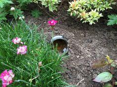 Last van slakken in de tuin? Dat is simpel op te lossen met deze fantastische tip!