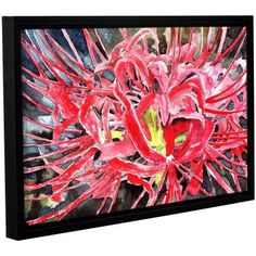 ArtWall Derek Mccrea Red Spider Lily Gallery-wrapped Floater-framed Canvas, Size: 16 x 24, White