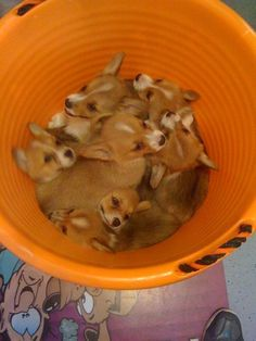 a bucket full of happiness.
