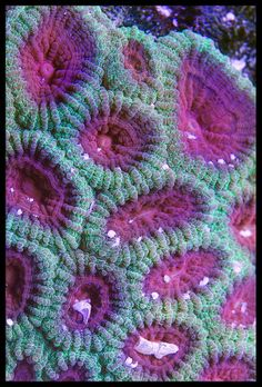 Close up of a coral. The violet color is amazing