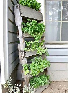 Upcycled Pallet As A Vertical Garden