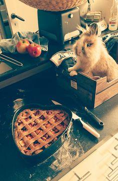 Appeltaart bakken was nog nooit zo leuk!