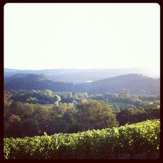 Good Morning St. Helena! Beautiful morning look by Vineyard 29 over 2929 Estate Cabernet franc.