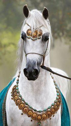 Jess - I ❤cute animals - Pferde Beautiful Arabian Horses, Majestic Horse, Pretty Horses, Horse Love, Egyptian Arabian Horses, Arabian Horse Costume, Horse Photos, Horse Pictures, Beautiful Creatures