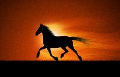 馬、実行している、日没、黄金の空、暗い、創造的、スピード、草 壁紙