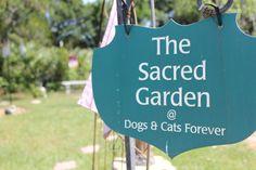 The sacred garden.  #cat #dog #nokillshelter #adoptadog #saveadog #ftpierce #florida #dogsandcatsforever www.dogsandcatsforever.com