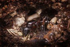Ako sa zbaviť mravcov v byte, dome, na záhrade aj v pieskovisku   TopByvanie.sk