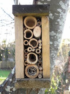 bug houses provide winter shelter for ladybugs and solitary bees Garden Bugs, Garden Insects, Garden Pests, Insect Box, Bee Hotels, Ladybug House, House Bugs, Mason Bees, Forest School