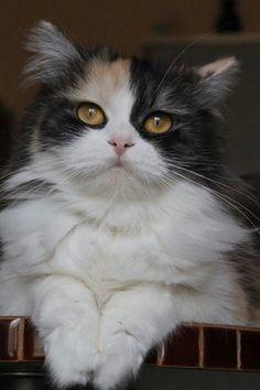 Cat ♡♡♡
