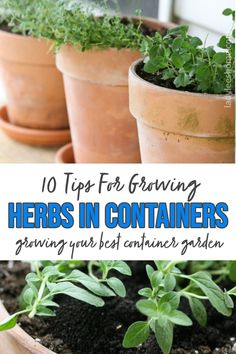10 tips that will help you grow the best container garden ever, indoors or outdoors. Grow your herbs in containers year round! Container Herb Garden, Herb Gardening, Growing Herbs In Pots, Herbs Indoors, Garden Projects, Compost, Natural Remedies, Landscaping, Indie