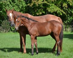 Ginger Punch & her 2014 Deep Impact (JPN) filly (photo: Northern Farm)