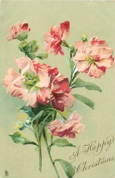 Pink flowers (stock?) ~ 1906